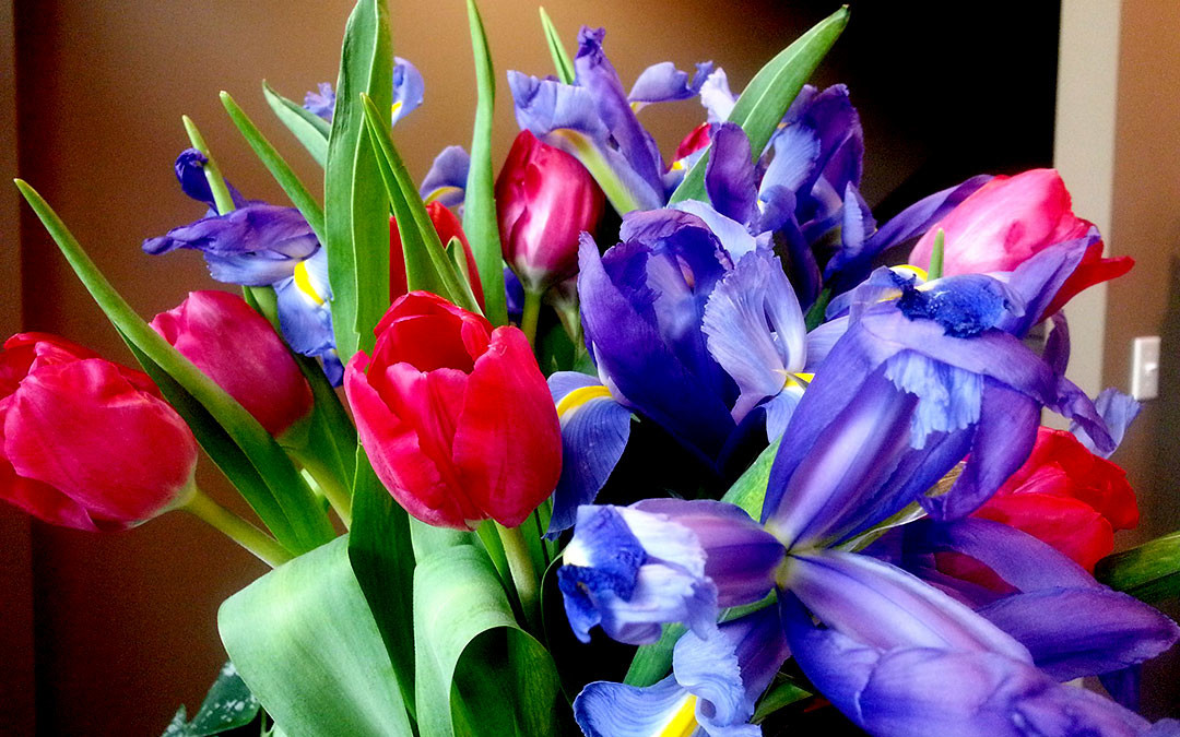 Tulips are Red and Irises are Purple